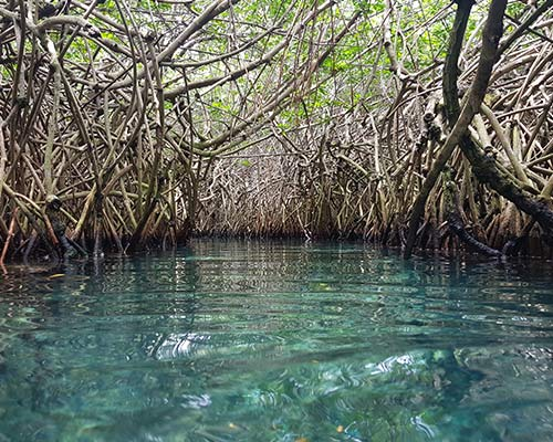 mangrove forest in México