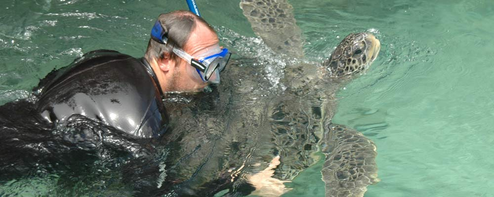 veterinarian with green sea turtle in aquatic animal facility
